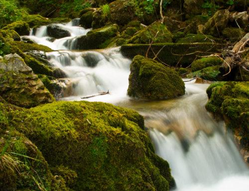 Die ruhe im Wald und das plätschern vom Bach
