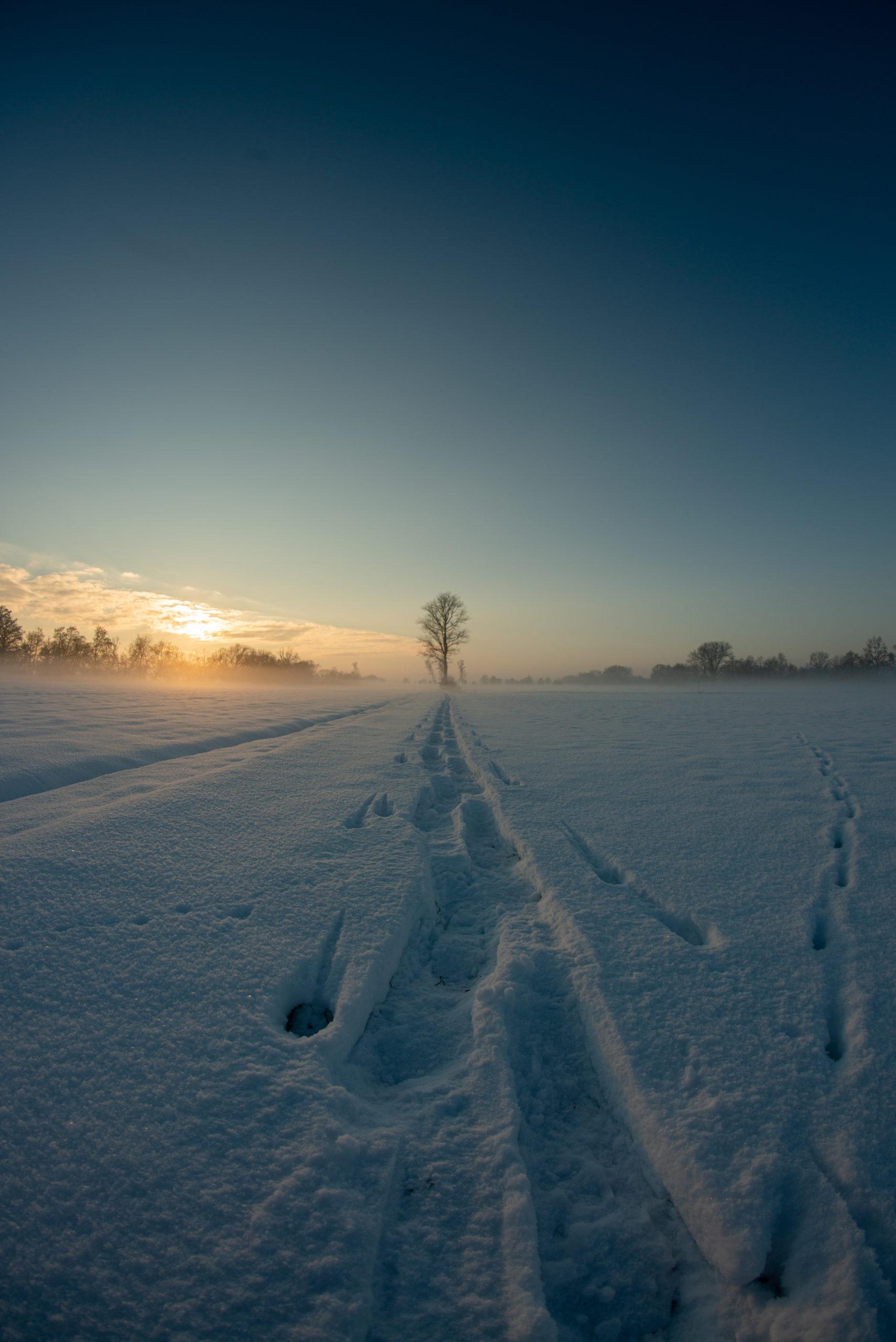 daod - im Schnee